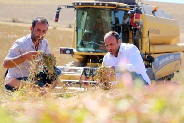 Erzurum'da ilk 'Karabuğday' hasadı sevindirdi