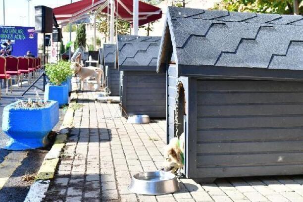 Fatih'te Sokak Hayvanları Tedavi Merkezi açıldı