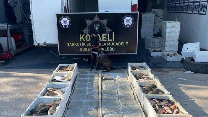 Balık yüklü kamyonetin tabanında 53 kilo 'skunk' ele geçirildi