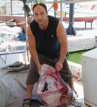 Antalya'da dev köpekbalığı