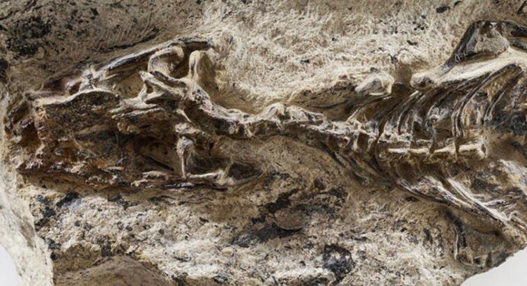 240 milyon yıllık kertenkele fosili bulundu