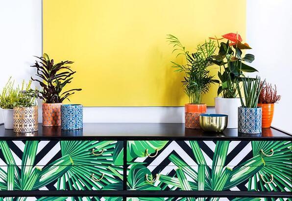 Ev dekorasyonunda süs bitkileri