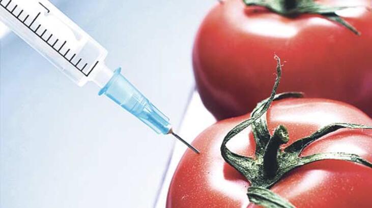Balık geninden domates üretildi!