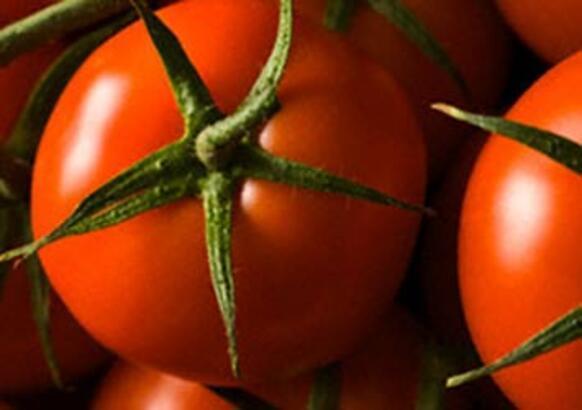 Bu domatesler kanseri önlüyor!