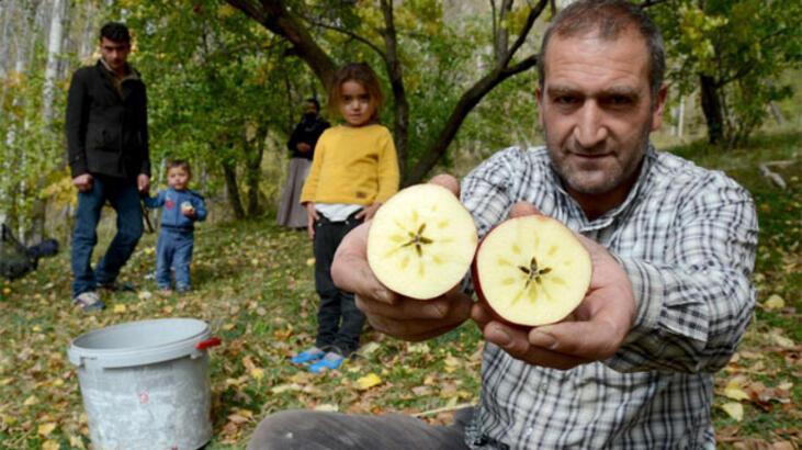 Sarıkamış'ın kırmızı yıldız elması pazar arıyor!