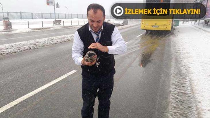 Yolda kalan tavuğu otobüs şoförü kurtardı