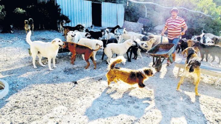 'Oyuncak köpekler sokak köpeği oldu'