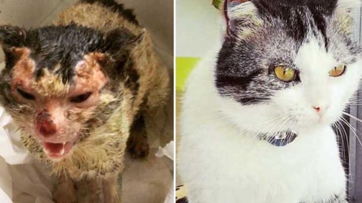 Yangında yaralananan kedi veterinerin kapısını çalınca...