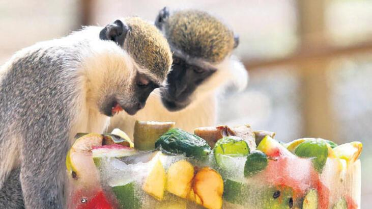 Hayvanat bahçesinde buzlu meyve servisi