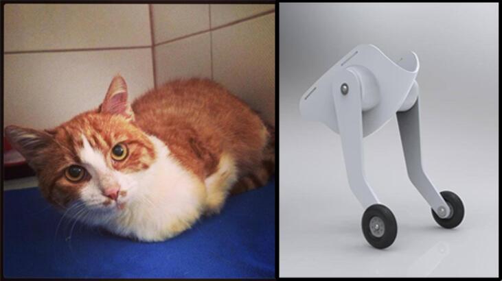 Kedi Umut'un protezlerini Türk mühendisler geliştirdi!