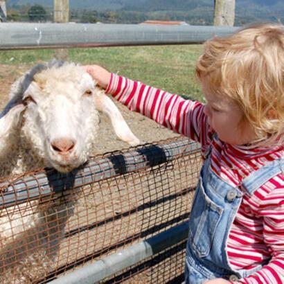 Çocukların kurbanlık hayvanlara ilgisi sakıncalı olabilir