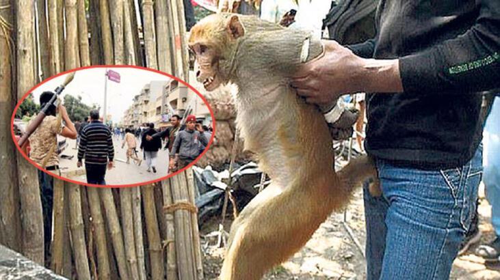 Libya'da 'maymun' çatışması: 20 ölü