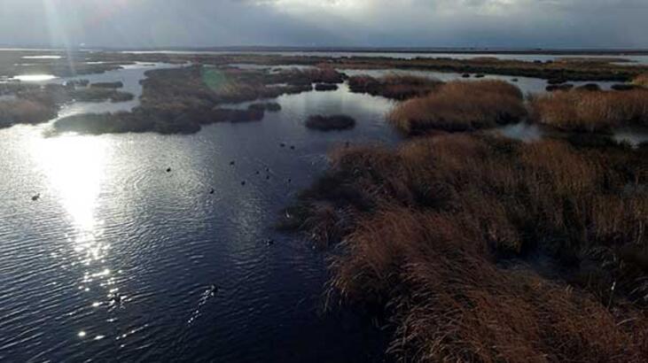 Biyolojik zenginlik alanı: Kızılırmak Deltası