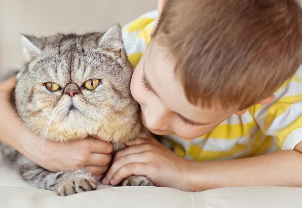 Kedilerin davranışları ve nedenleri