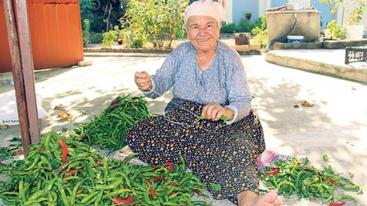 Edirne'de 'acı' hasat