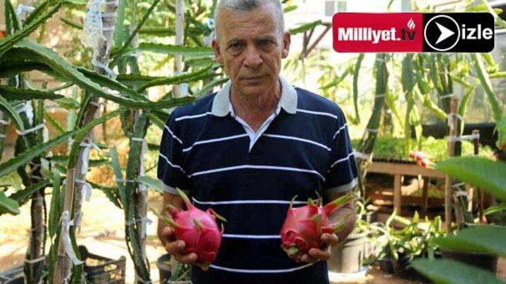 40 TL'ye Mersinli 'Ejder Meyvesi'