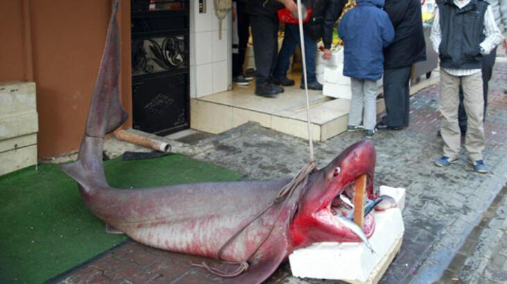 Marmara Denizi'nden 600 kiloluk camgöz çıktı