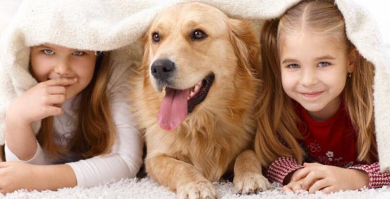 Çocuğunuza hayvan almadan önce bir kez daha düşünün!