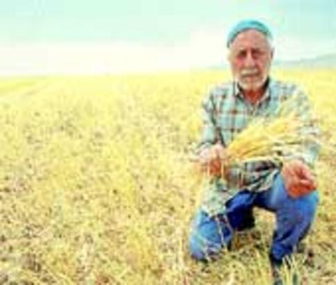 Kuraklık aşkı ve ekini vurdu