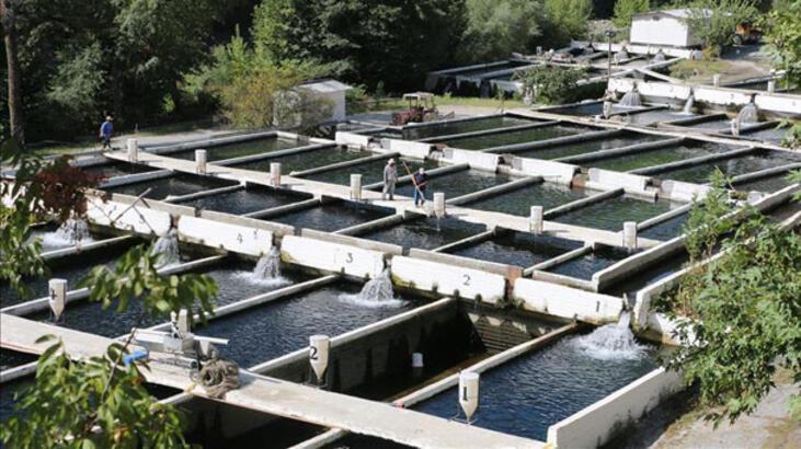 Su ürünleri ve hayvansal mamullerde ihracat hedefi 3 milyar dolar