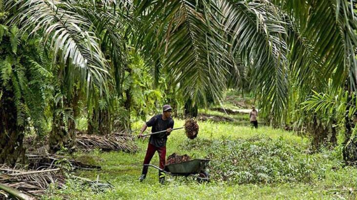 Malezya palm yağı ihracatında Türkiye'de büyük potansiyel görüyor