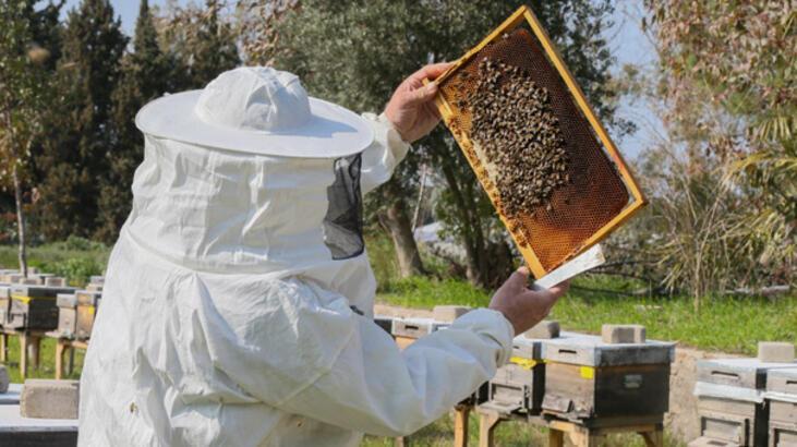 """Bal arısı """"efe"""" tescillendi"""
