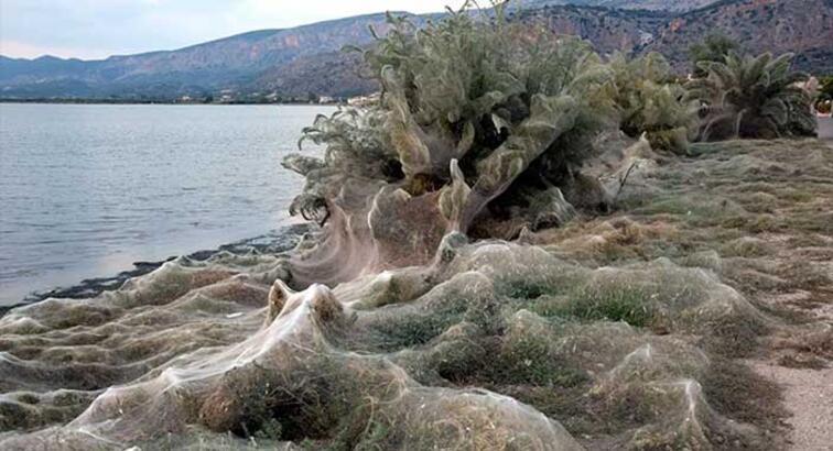 Yunanistan'da 300 metrelik devasa örümcek ağı görüldü