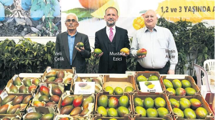 Tropikal mango Antalyalı oluyor