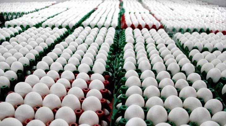 Tavuk yumurtası üretimi geriledi