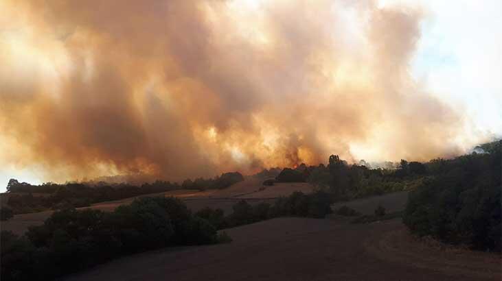 Son dakika: Bursa'da korkutan orman yangını!
