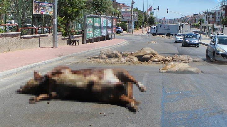 Caddeye dökülen kurban atıkları zor anlar yaşattı!