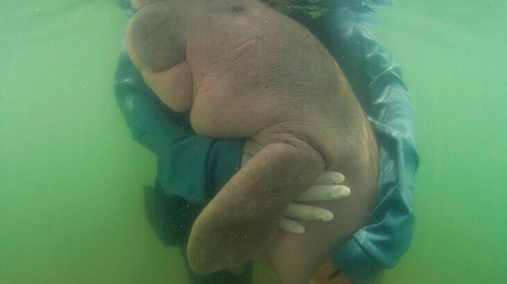 Bebek dugong öldü!