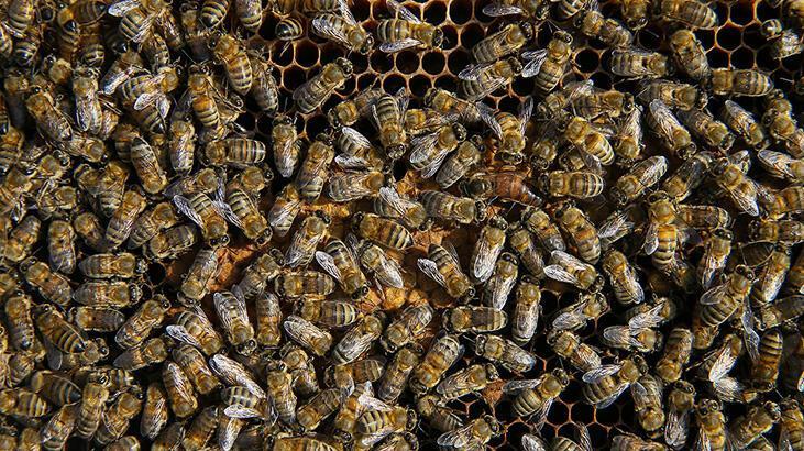 Kovanları çalarken arıların soktuğu genç öldü