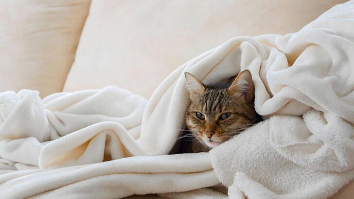 Kedi nezlesi nedir, nasıl tedavi edilir?