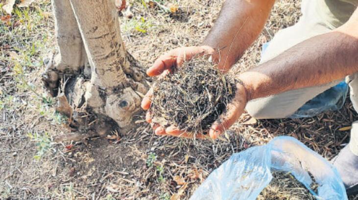 Kampüsteki bitkiler atıklarla yeşeriyor
