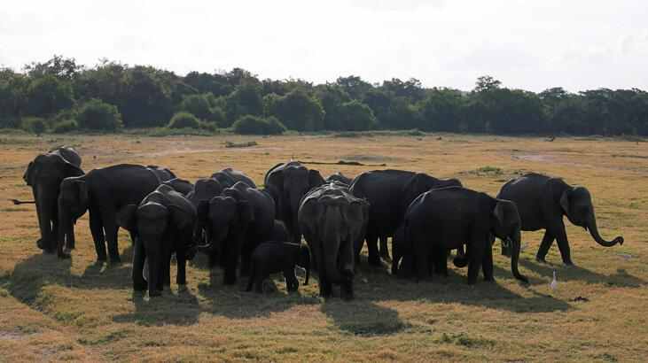 Ölü bulunan fillerde korkunç şüphe