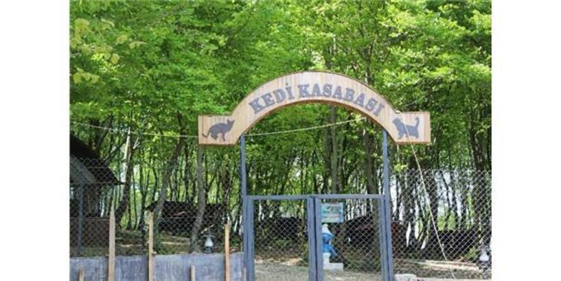 SAMSUN'DA 'KEDİ KASABASI'