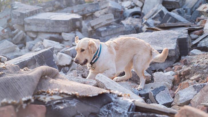 Köpekler depremi önceden hisseder mi?