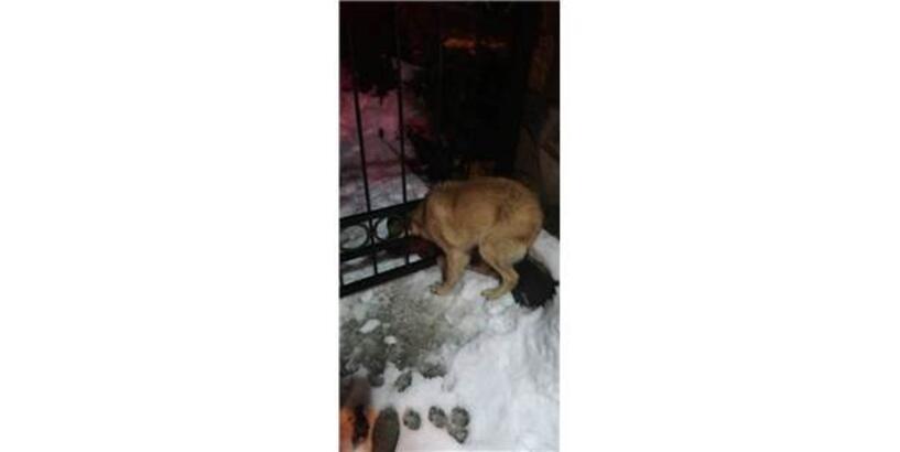 Demir Kapıya Sıkışan Köpeği İtfaiye Ekipleri Kurtardı