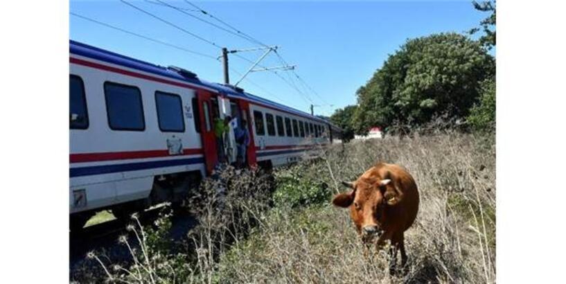 Hayvanların Kurtarmak İsterken Trenin Altında Kaldı