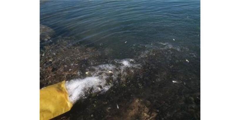 Dsi Çat Barajına Yavru Balık Bıraktı