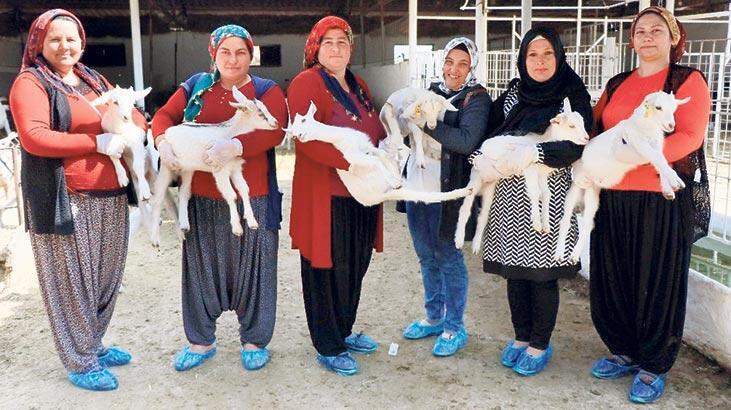 Üniversiteler dershane gibi çalışıyor... Çobanlık eğitimi