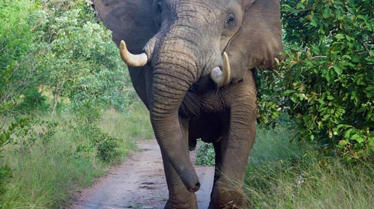 Malezya'da filin saldırdığı kişi hayatını kaybetti
