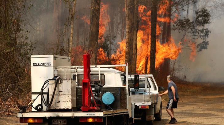 Orman yangınları yüzlerce koalayı öldürmüş olabilir
