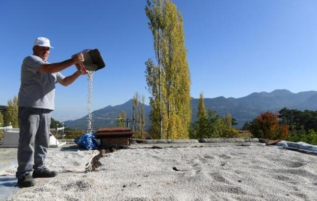 Konyaaltı Belediyesi fasülye hasat etti