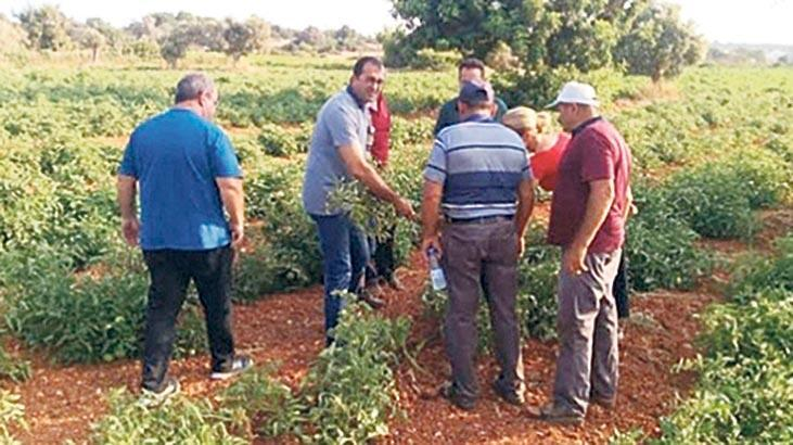 Tarım Dairesi'nden Alaniçi köyünde eğitim