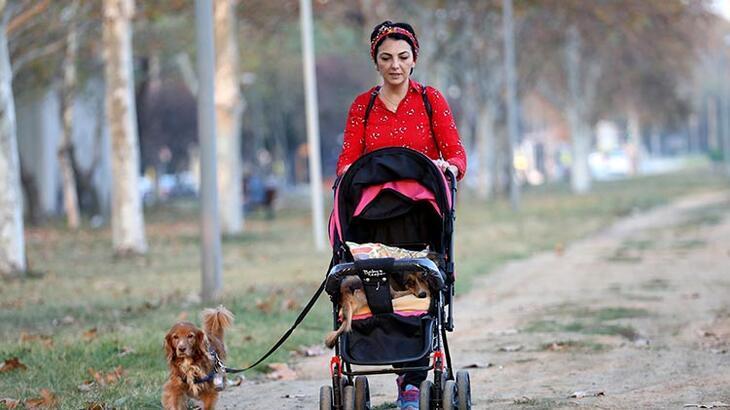 Sahiplendiği felçli köpeği bebek arabasıyla gezdiriyor!