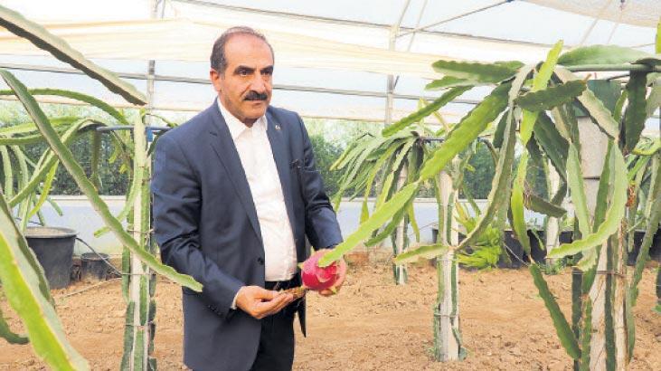 Çiftçiler, tropik meyveye yöneldi