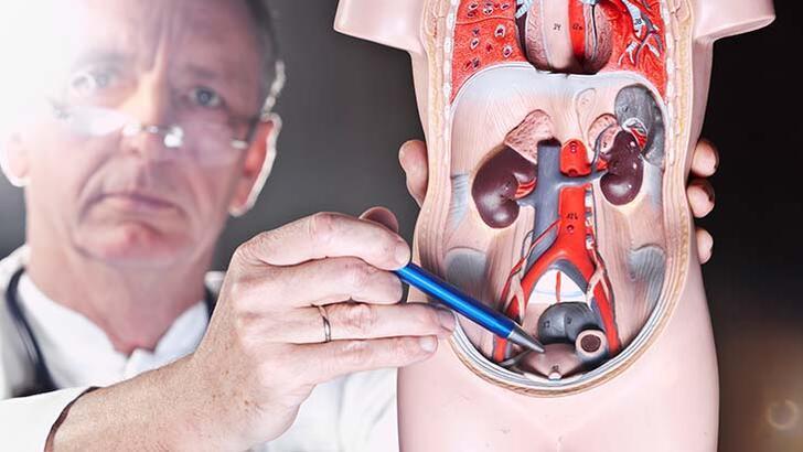 Üroloji nedir, neye bakar? Üroloji (bevliye) bölümü doktoru (ürolog) hangi hastalıklara bakar?