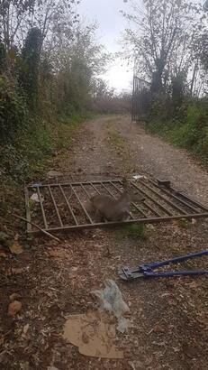Demir bahçe kapısına sıkışan yavru karaca kurtarıldı